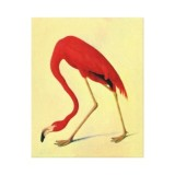 audubon_american_flamingo_painting_canvas_prints-re119c870aecb427ca12d008a8fd227d8_xzwj_8byvr_325